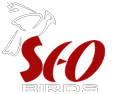 SEO Birds Logo - SEO India